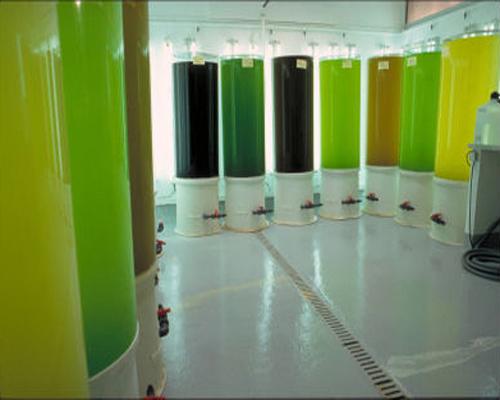 Eclairage LED pour microalgues
