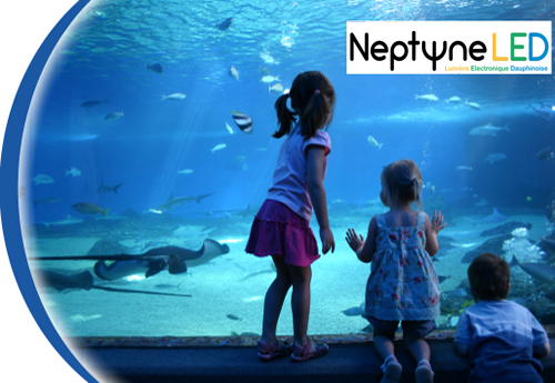 Neptune LED pour aquarium public
